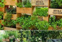 Kräuter Garten