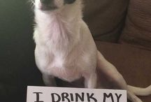 Dog Shaming / Dog Shaming Pictures are Funny Dog Pictures that have two main components: The sign detailing the mischievous deed, and the dog with a priceless look of guilt, shame or indifference. There are extra bonus points if the mess is included in the picture. #dogshaming #dogs #funny
