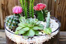 Terrário de cactus