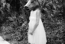 All the pretty horses / by Medea Kurzschluss