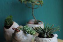 ORGANIKUS planters by Anna Czarnocka-Nakrewicz / #ceramicplanters #plantpot #stoneware #annaczarnocka #organic #succulents #airplants #cactus #ceramicpots #nomenomen #handmade #plantpot #evergreen #pots #organicform #annaczarnocka #czarnockanakrewicz