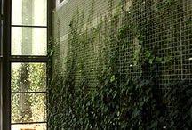 duvar pano demir sarmaşık