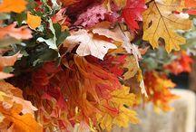 Fall / by Gail Ellis Morris