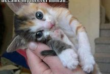 Katzen süß