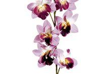 Artificial Flower Websites / by Debra Thommen Reynolds