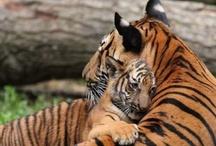 animals / by Katie van Wie