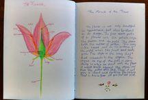 Эпоха ботаники