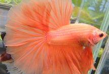 Saltwater fishes aquarium
