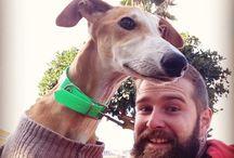 Beards and Animals