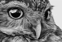 vogels / Inspiratie om te schilderen