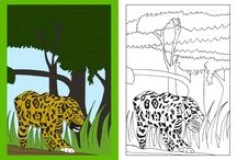 My rainforest colouring pages