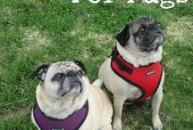 pug harness for max