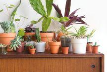 Planter i hus