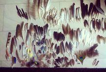 Ptaki birds / Fascynacja