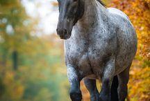 My horses 1 (Astro)