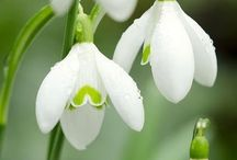 Spring flowers / Spring flowers that I will plant in my garden......