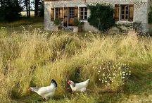 Countryside life.