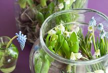 Bakjes voor planten en bolletjes