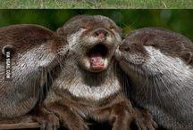 Rozkošné zvieracie mláďatká