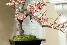 Beauty in Bonsai Tree