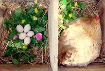Raising Chickens / Laying Hens