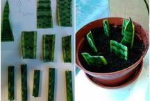 размножение зеленых