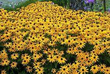 Pasta de flores