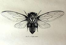 Tavole botaniche insetti, animali fiori etc..