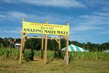 Amazing Maize Maze / Over 7 acres of fun!  Great for team-building - corp groups, scouts, and church groups welcome!  Open Sept 13th - Nov 2nd in 2013.