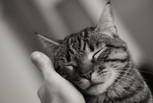 Adorable Pets / Love for dogs and cats