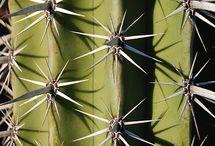 | Un cactu, des cactus |
