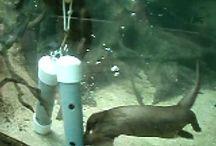zoo enrichment