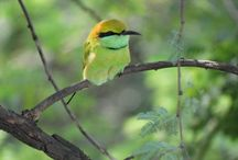Indian Bee Eater Bird / How is Photo Click Friends...??