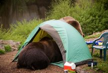 Safe Kamping / Camper, hiker and backpacker awareness / by St. Mary - Glacier Park KOA