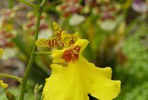 Orchids / Photos by Audrey Lambert