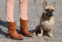 Awaiting my future pet frenchie--nugget. / by Liz Perry