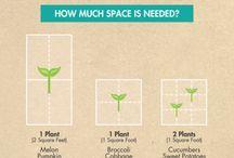 Bio gardening - bio kertészet