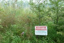 Land Reclamation / Tree cultivation in waste land