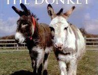 Donkey Books