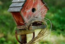 Birdhouses and feeders / by Deb Venman