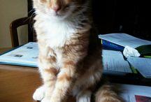 mosqui / kitty