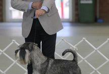 Dog Show: Conformation