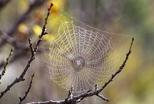 spider webs / by Sherry Smith