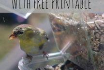 Nature Study/Bird watching / by Haley Aldrich