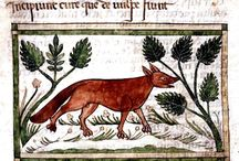 Medieval foxes / Medieval foxes for Master Edward