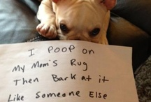 Frenchies are Funny!