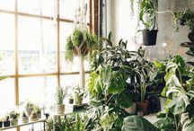 Plants addict. .....