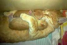 История жизни неутомимого авантюриста / Мой кот...это не просто кот! Это друг, брат, почти сестра)))