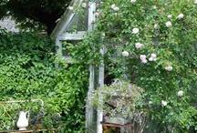 Trädgård inspiration