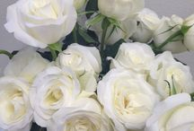 Bridal Roses White and Ivory / Varieties of wedding rose